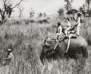 Dronning Elisabeth på tigerjakt, 1961